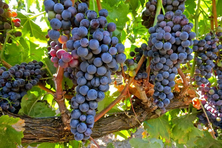 Hunter Valley Food and Wine Lovers Tour, Sightseeing in Sydney - Tour