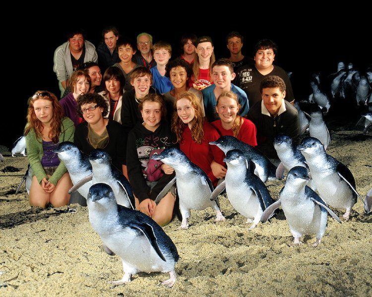 Grand Penguins Tour, Sightseeing in Melbourne - Tour