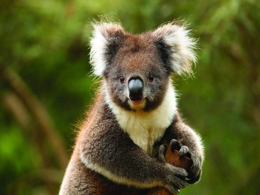 Wildlife Encounter Tour with Lunch, Sightseeing in Melbourne - Tour
