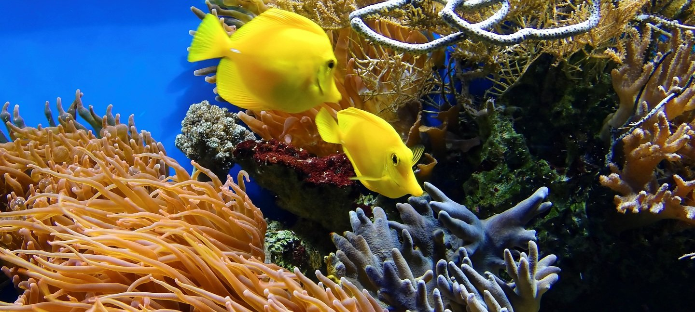 Scuba Diving - Short trips - Collection