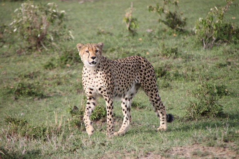 Kenya - Tour