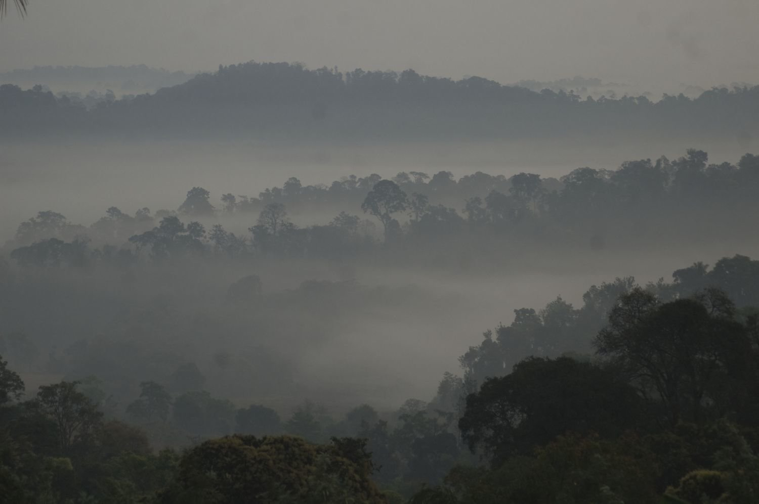 Misty Coorg Homestay - Tour