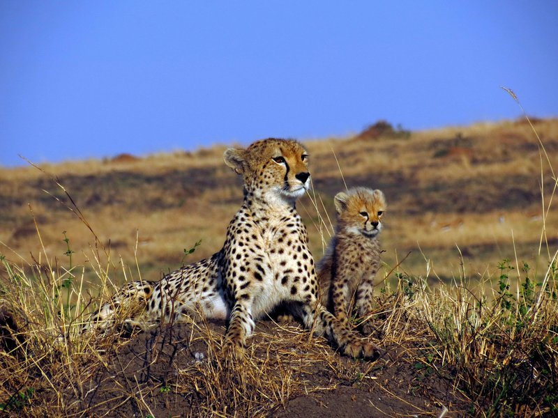 Kenya Safari - Tour