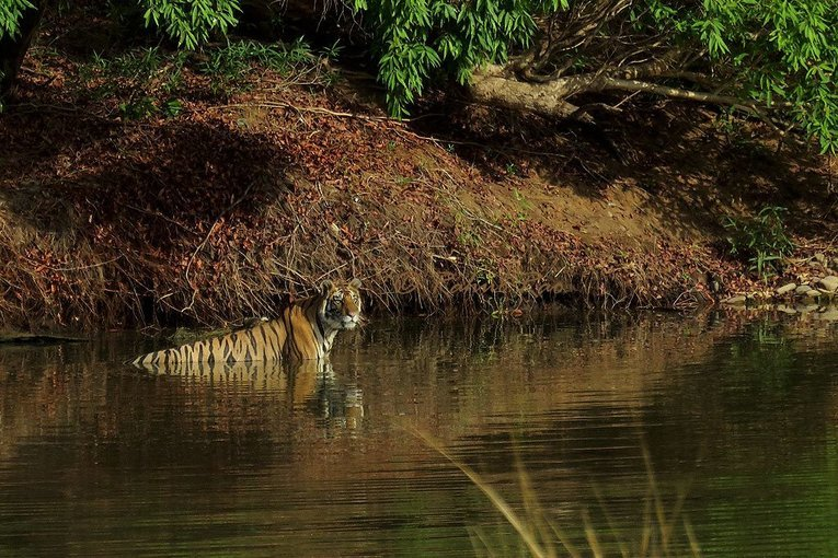 Panna National Park - Tour