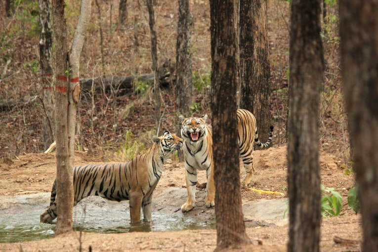 Pench National Park - Tour