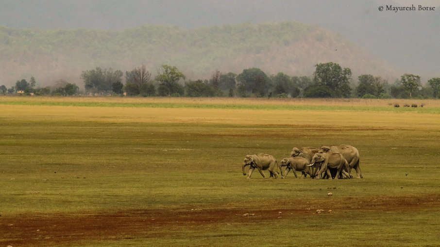 Corbett National Park - Tour