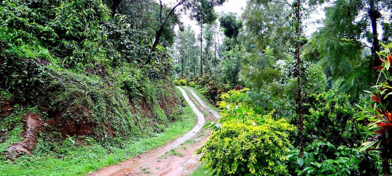Trek to Kottebetta, Coorg - Tour