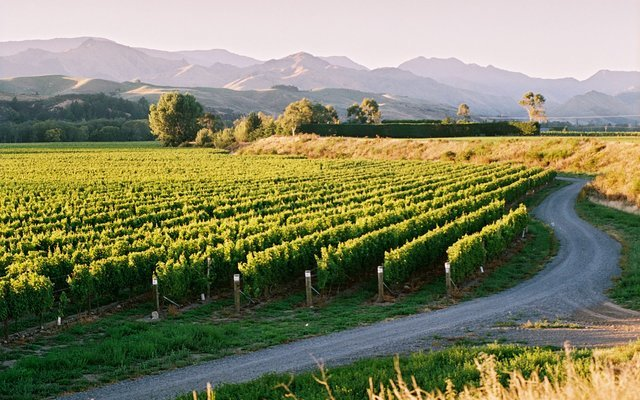 Martinborough Gourmet Wine Tour, Sightseeing in Wellington - Tour