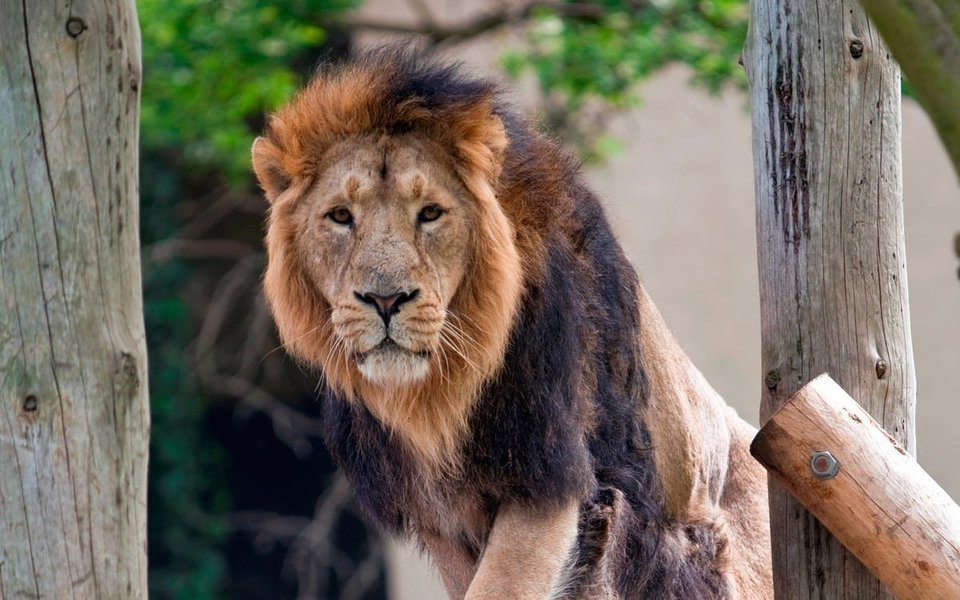 London Zoo Tickets in London - Tour