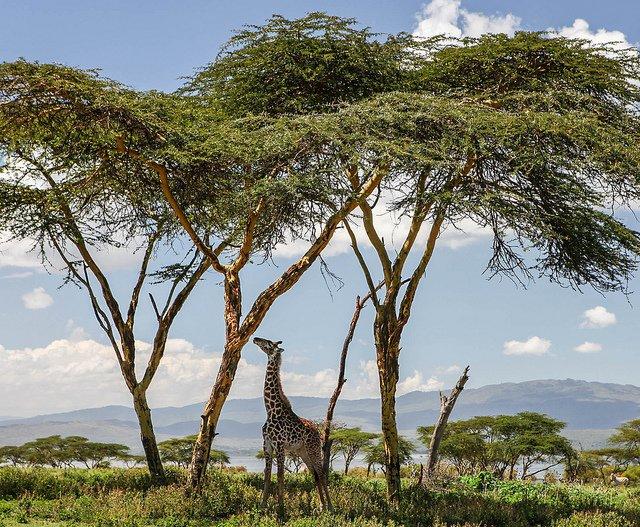 Kenya Safari 9 Nights 10 Days - Tour