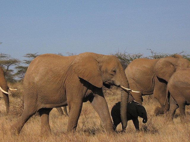 Kenya Safari 6 Nights 7 Days (Option I) - Tour
