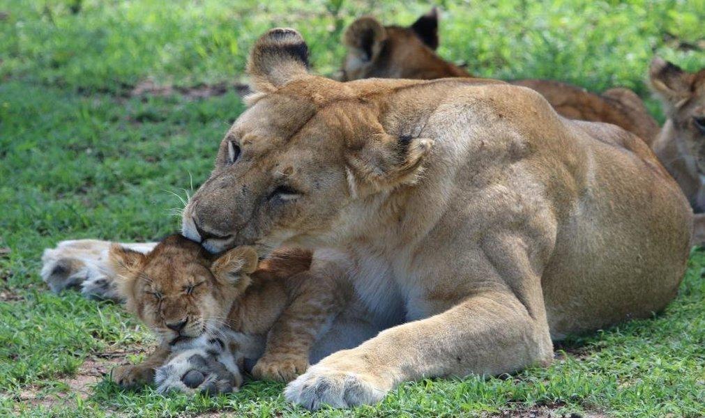 4-Day Safari to Tarangire, Serengeti and Ngorongoro Crater from Arusha - Tour