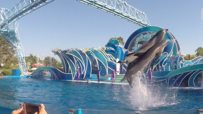 Dolphin Show Tickets in Pattaya - Tour