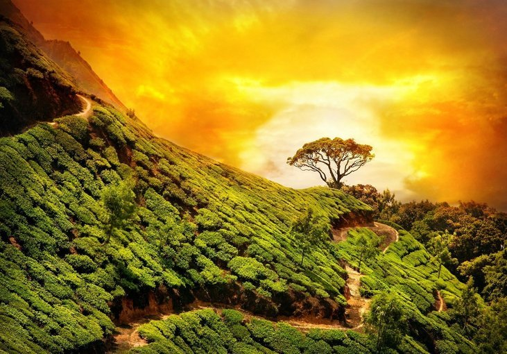 Munnar Meadows - Tour