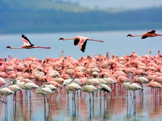 Tour Package To Kenya (Flame Safari) 05 Days - Tour