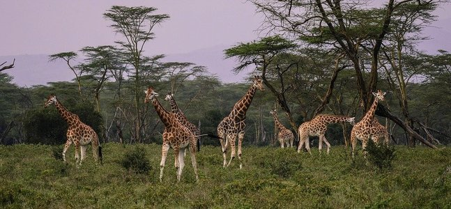 Arusha | Tanzania Safaris - Collection