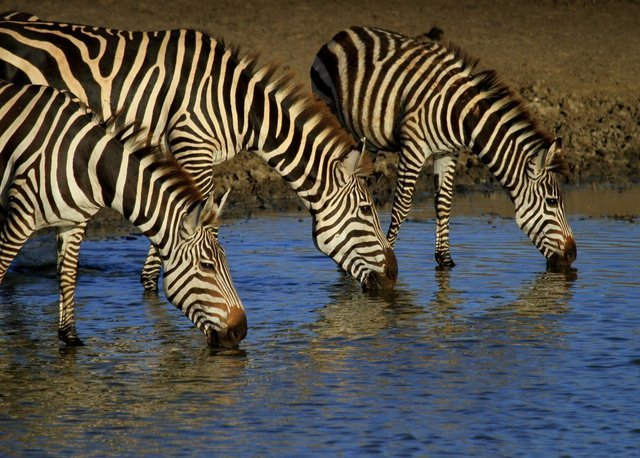 Mwanza | Tanzania Safaris - Collection