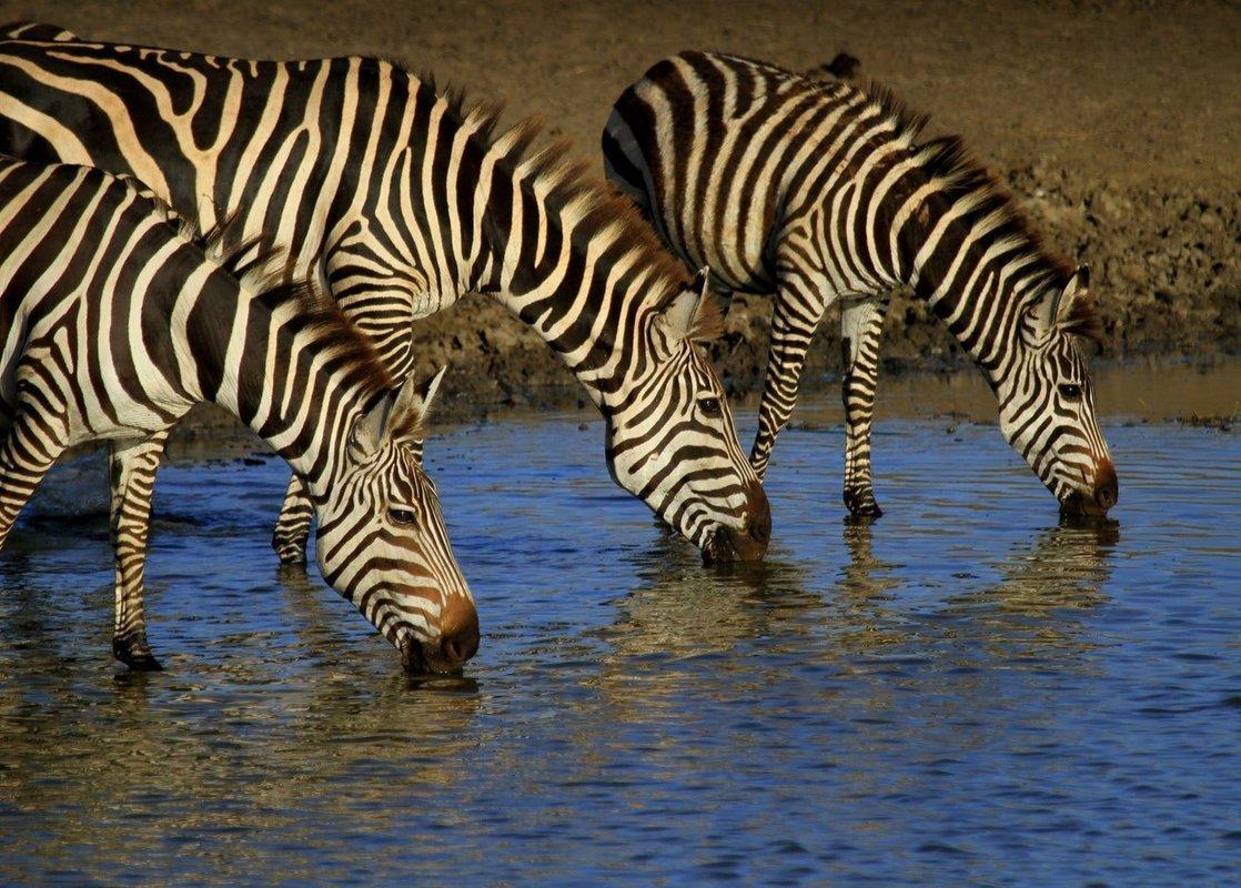 Mwanza   Tanzania Safaris - Collection