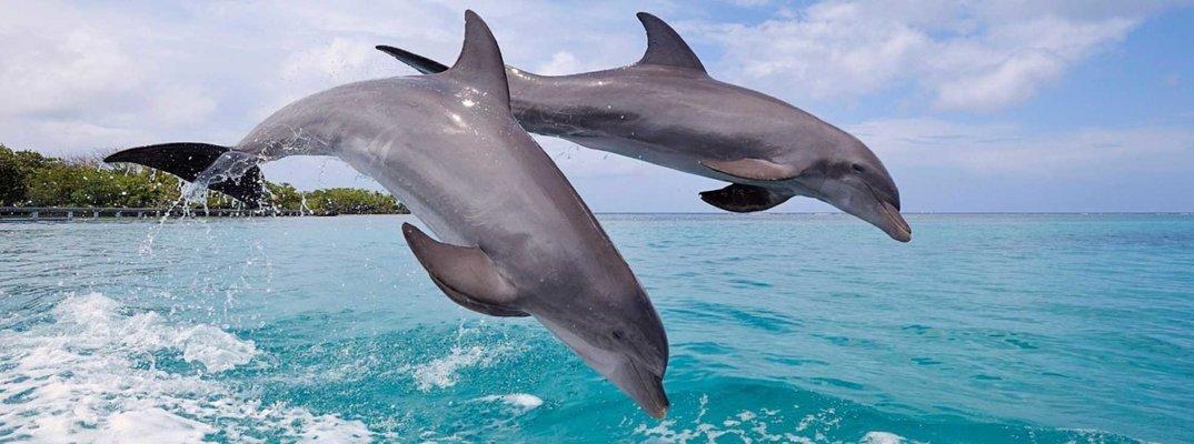 Dolphin Spotting trip - Tour