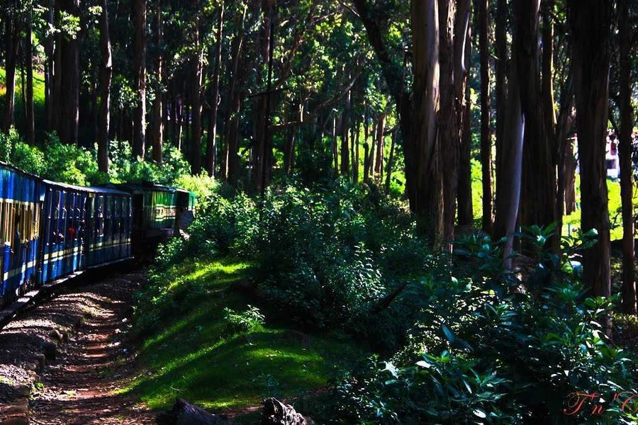 Tranquility of Ooty & Kodai - Tour