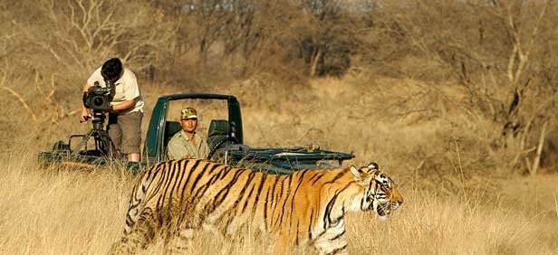 Golden Triangle with tigers - Tour