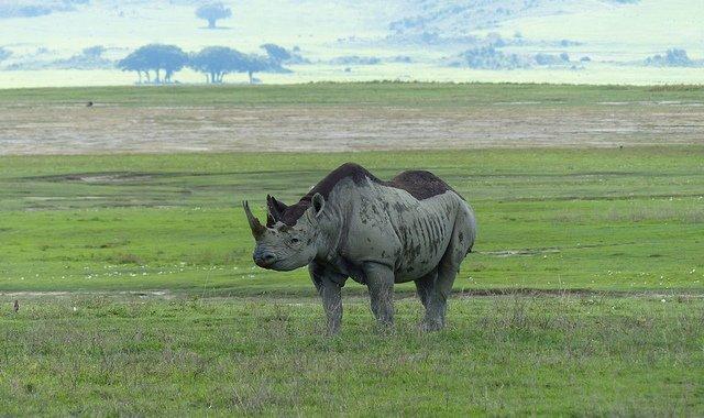 3-Day Ngorongoro Crater and Serengeti Safari from Arusha - Tour