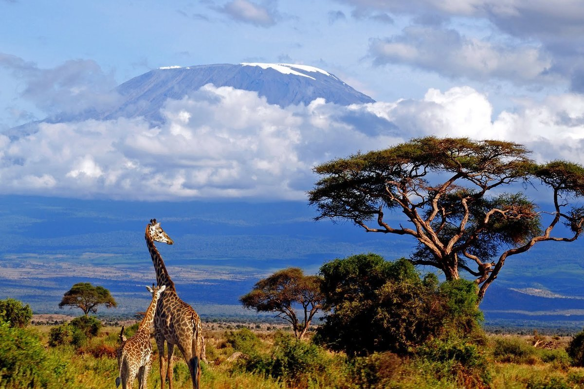 African Safari Destinations - Collection