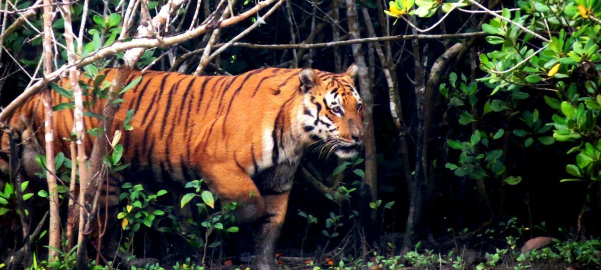 Short Escape To Sundarbans - Tour