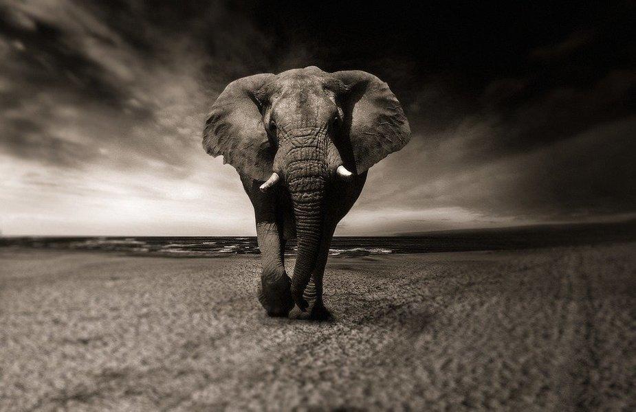 The Hidden Secrets of Tanzania Safari - 8 Days - Tour