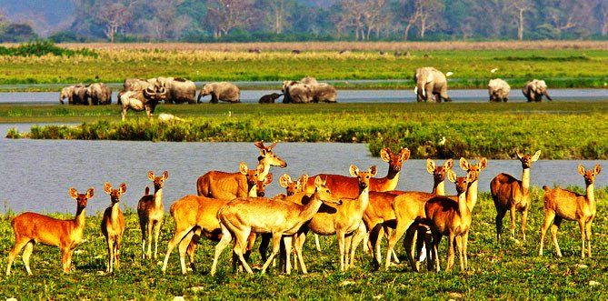 Kaziranga with Waterfalls Shilong - Tour