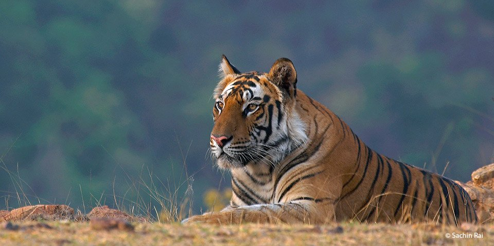 Short Escape to Bandhavgarh - Tour