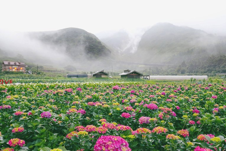 Yangmingshan National Park and Hot-Spring Tour, Sightseeing Tour in Taiwan - Tour