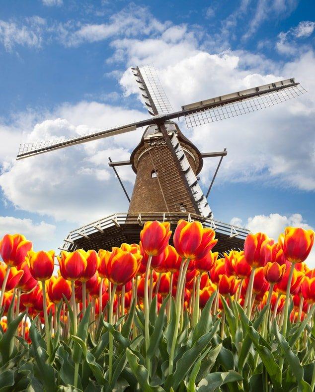 Amadeus Tulip Serenade - Tour
