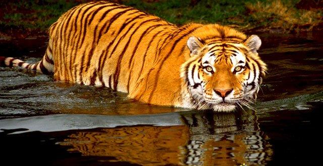 Sundarbans - Collection