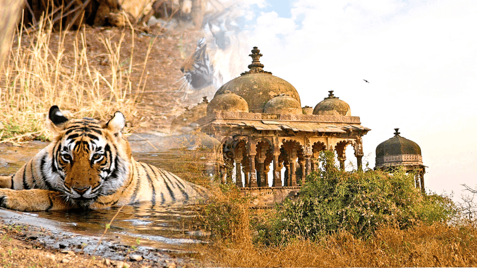 Golden Triangle Tour with Ranthambore - Tour