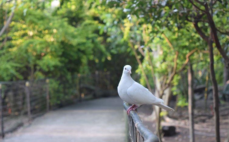 Bird Sanctuary Kayak Tickets in Goa - Tour