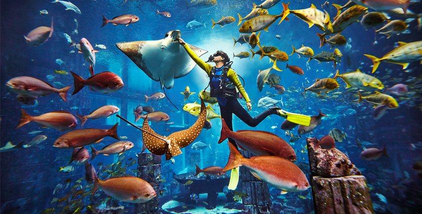 Scuba Diving Tour Dubai - Tour