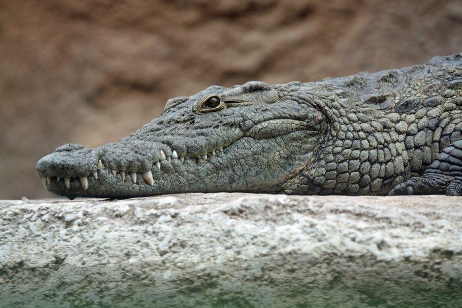 Crocodile Dundee with Bird watching - Tour
