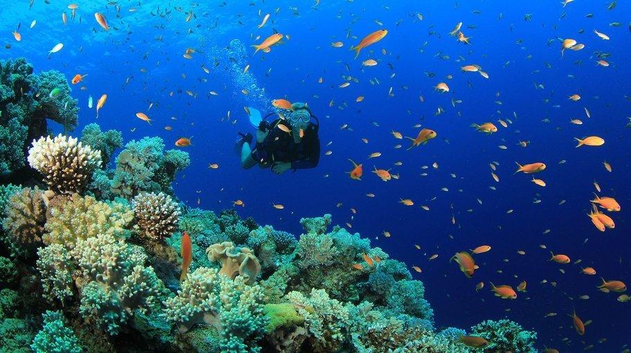 scuba dive in monsoon - Tour