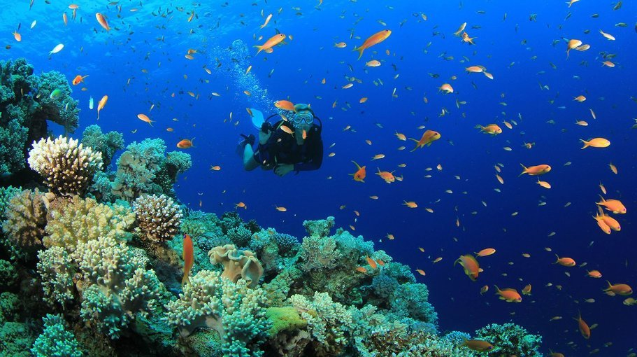 scuba dive in monsoon - Tour