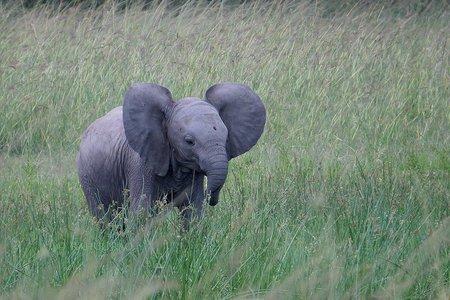 Classic Kenya Safari