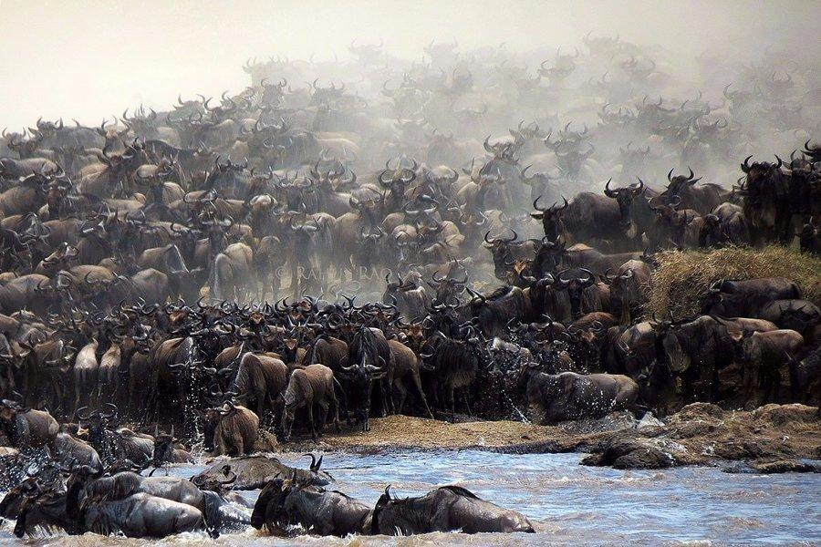 Best of Kenya (Migration) - Tour
