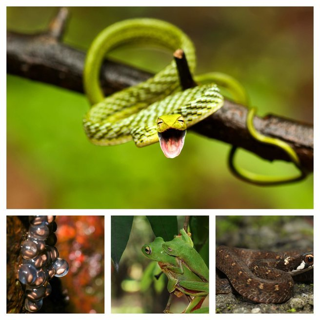 Amboli Ghat Macro Photography Tour and Nature Trail - Tour