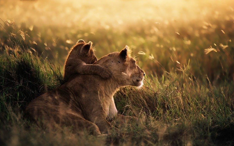 Best of Kenya Safari-7D 6N - Tour