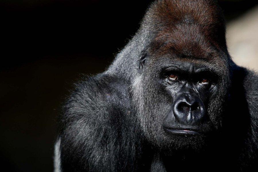 Gorilla and Wilderness Safari - Tour