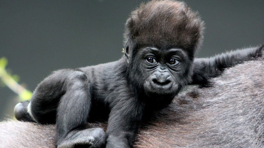Rwanda-Gorilla trekking-5D|4N - Tour