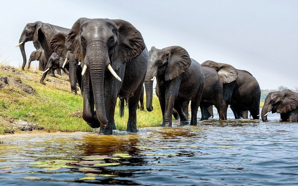 Tanzania Budget Lodge Safari-5D 4N - Tour