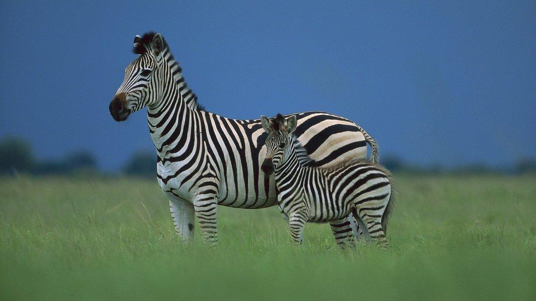 Tanzania Short Safaris-3D|2N - Tour