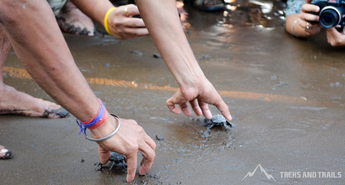 Velas Turtle Festival 2019 from Mumbai with AC bus - Tour
