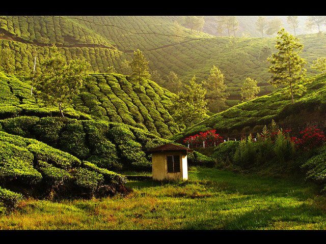 Munnar Delights - Honeymoon Special - Tour